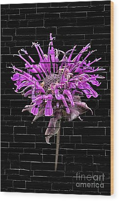 Purple Flower Under Bricks Wood Print by Walt Foegelle