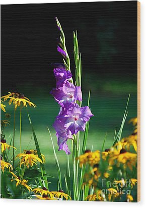 Wood Print featuring the photograph Purple Glads And Black-eyed Susans by Lila Fisher-Wenzel