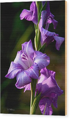 Purple Glads Wood Print by Christopher Holmes