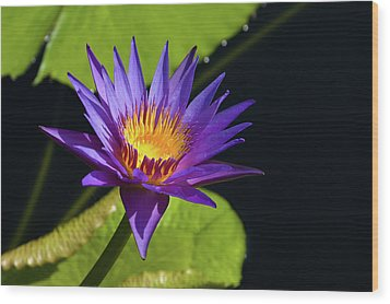 Wood Print featuring the photograph Purple Gold by Steve Stuller