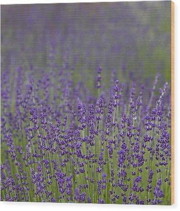 Purple Haze Wood Print by Rebecca Cozart
