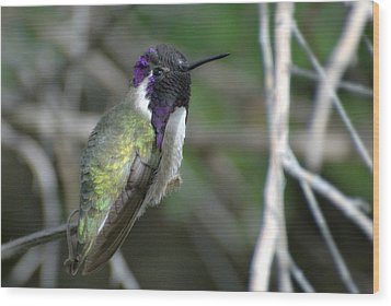Wood Print featuring the photograph Purple Iridescence 2 by Fraida Gutovich