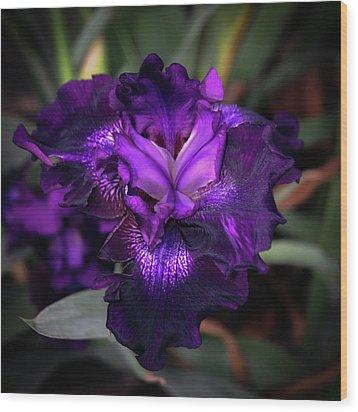 Purple Iris 5994 H_2 Wood Print