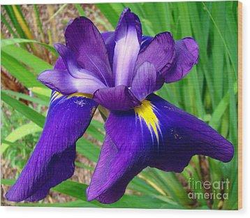 Purple Iris Beauty Wood Print by Sue Melvin