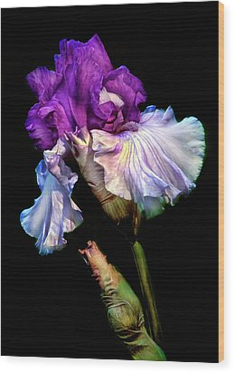 Purple Iris Wood Print by Dave Mills