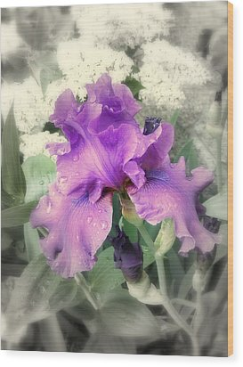 Purple Iris In Focal Black And White Wood Print by Margie Avellino