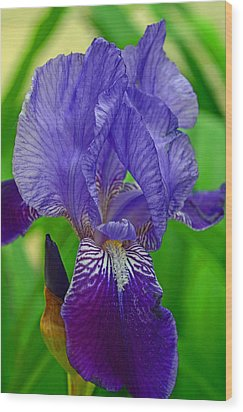 Purple Iris Wood Print by Lisa Phillips