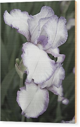 Wood Print featuring the photograph Purple Is Passion by Sherry Hallemeier
