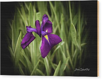 Wood Print featuring the photograph Purple Japanese Iris by Joann Copeland-Paul