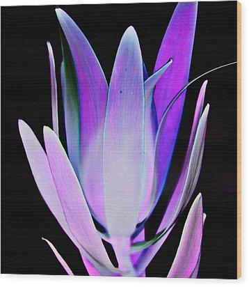 Wood Print featuring the photograph Purple by John Hansen