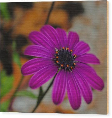 Wood Print featuring the photograph Purple  by Laura DAddona