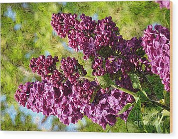 Purple Lilac 1 Wood Print by Jean Bernard Roussilhe