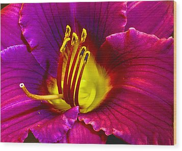 Wood Print featuring the photograph Purple Lily by Bill Barber