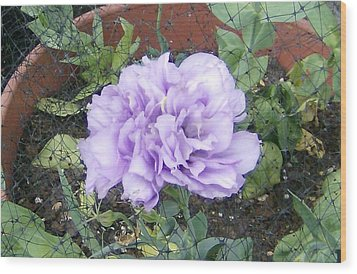 Purple Lisianthus Wood Print