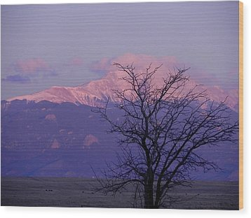 Purple Mountain Majesty Wood Print by Adrienne Petterson