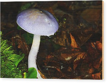 Purple Mushroom Russula Cyanoxantha Wood Print by Andrew Pacheco