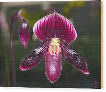 Purple Orchid Wood Print by Ann Tracy