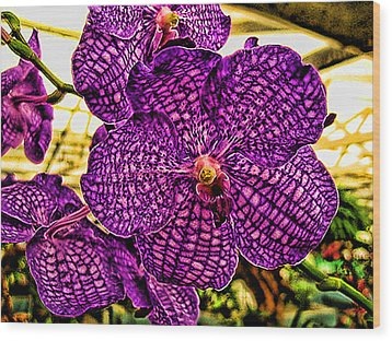 Purple Orchid Wood Print by Paul Cutright