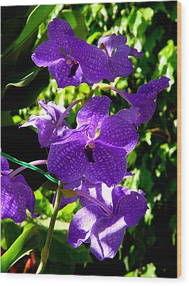 Purple Orchids Wood Print by Susanne Van Hulst