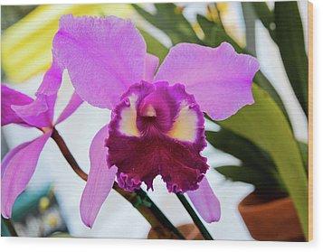 Purple Orkid Wood Print