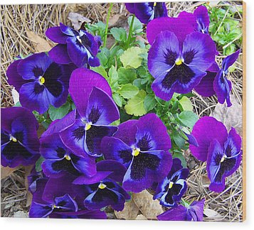 Wood Print featuring the photograph Purple Pansies by Sandi OReilly