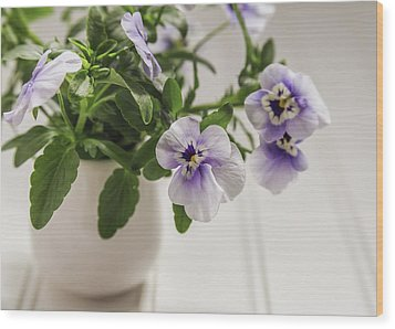 Wood Print featuring the photograph Purple Pansy Flowers by Kim Hojnacki