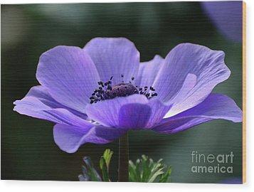 Purple Poppy Mona Lisa Wood Print
