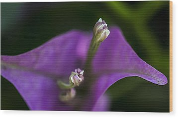 Wood Print featuring the photograph Purple Rest Flower by Paula Porterfield-Izzo