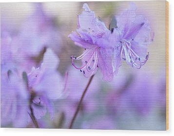Wood Print featuring the photograph Purple Rhododendron 1. Spring Watercolors by Jenny Rainbow