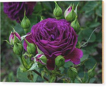 Purple Rose Wood Print by Alex Galkin