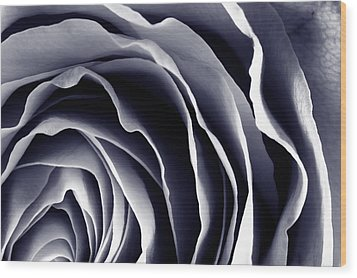 Purple Rose Wood Print