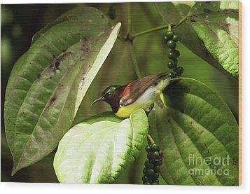 Purple-rumped Sunbird Wood Print by Venura Herath