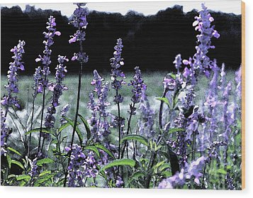 Purple Splendor Wood Print