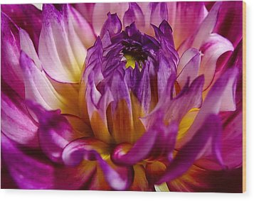 Wood Print featuring the photograph Purple Sunset Flower 2 by Marianne Dow