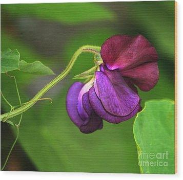 Purple Sweet Pea Wood Print by Marjorie Imbeau