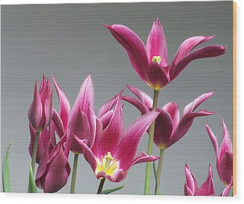 Purple Tulips Wood Print by Helen Northcott