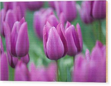 Purple Tulips Of Keukenhof Wood Print