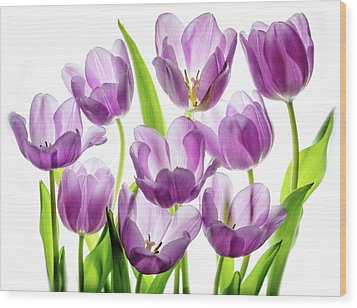 Wood Print featuring the photograph Purple Tulips by Rebecca Cozart