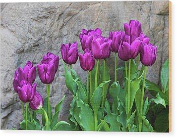 Wood Print featuring the photograph Purple Tulips by Tom Mc Nemar