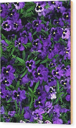 Wood Print featuring the photograph Purple Viola Flowers by Sally Weigand