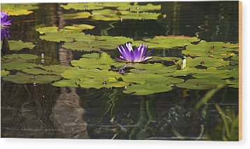 Purple Water Lilly Distortion Wood Print by Teresa Mucha