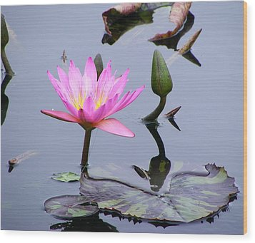 Purple Waterlily With Pod Wood Print by Margie Avellino