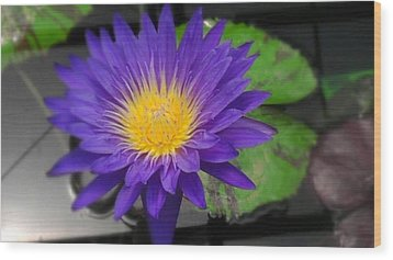 Purple Way Delight Wood Print