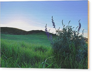 Wood Print featuring the photograph Purple Wildflowers In Beautiful Green Pastures by Matt Harang