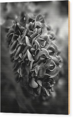 Purple Wisteria In Black And White Wood Print by Greg and Chrystal Mimbs