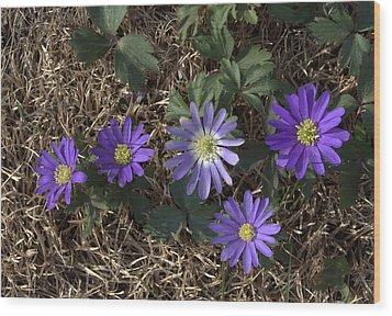 Purple Yard Flowers Wood Print by Liz Allyn