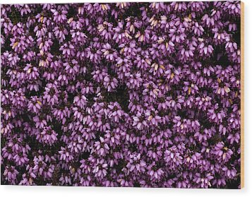 Purpleness Wood Print by John Gusky