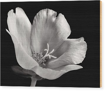 Wood Print featuring the photograph Purslane In Monochrome by David and Carol Kelly