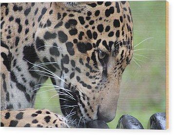 Jaguar And Toy Wood Print