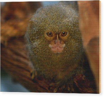 Pygmy Marmoset Wood Print